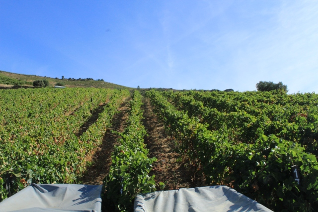 Quinta Nova (Wine Estate)